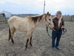 Jennifer caring for recently rescued horse Justin Time.