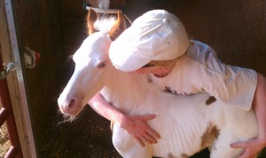 Jennifer and Easter, a foal born to a recently seized mare.